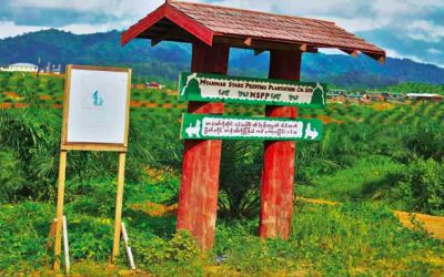 Green Desert: Communities in Tanintharyi renounce the MSPP oil palm Concession