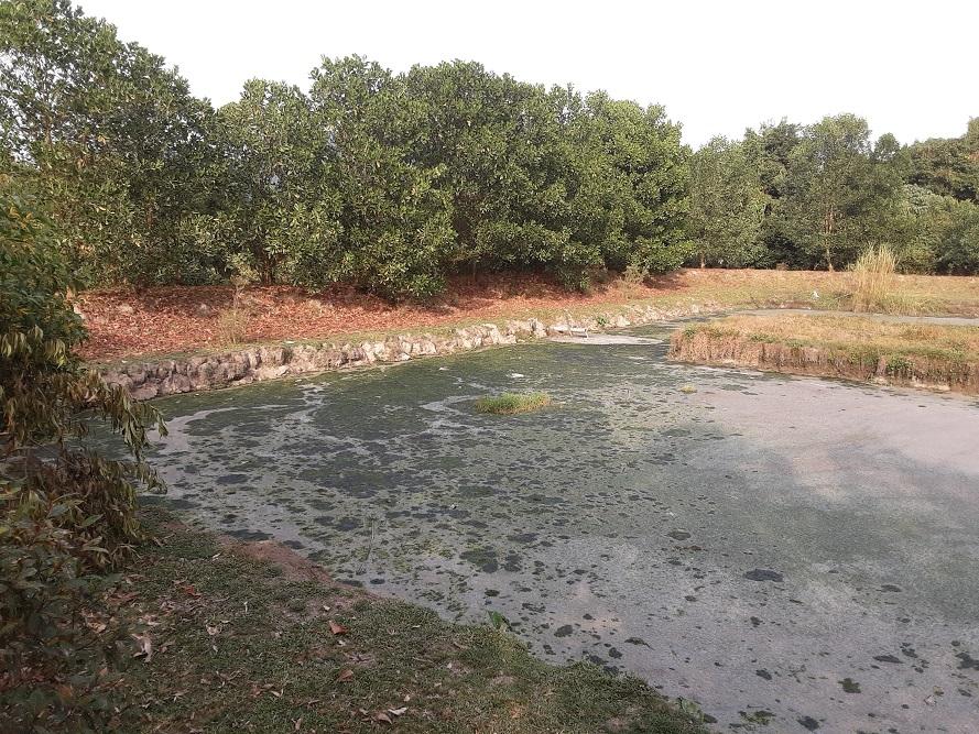 မွန်ပြည်နယ်၊ ဘီးလင်းမြို့၊ အဝန်းကြီးကျေးရွာ အနီးရှိ max myanmar ရာဘာခြံကုမ္ပဏီ၏ရေဆိုးစွန့်ပြစ်ခြင်း