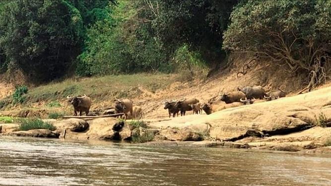 စစ်ကိုင်းတိုင်းဒေသကြီး၊ ဟုမ္မလင်းမြို့နယ်ရှိ ထမံသီတောရိုင်းတိရစ္ဆာန်ဘေးမဲ့တောတွင် တရားဥပဒေစိုးမိုးမှု ပျက်ပြားသွားပြီး ထိန်းသိမ်းရေးလုပ်ငန်းများ အင်အားချည့်နဲ့သွားချိန် ယခုကာလတွင်  ရွှေမျောတိုက်ခြင်းလုပ်ငန်းများ ဆောင်ရွက်ကာ ထမံသီဘေးမဲ့တော၏ တန်ဖိုးကျဆင်းအောင် လုပ်ကိုင်ဆောင်ရွက်နေကြကြောင်း စိတ်မကောင်းဖွယ်ရာ ကြားသိရပါသည်။